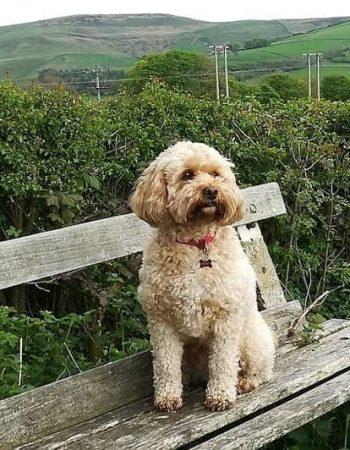 Peak Boarding – Home boarding for dogs