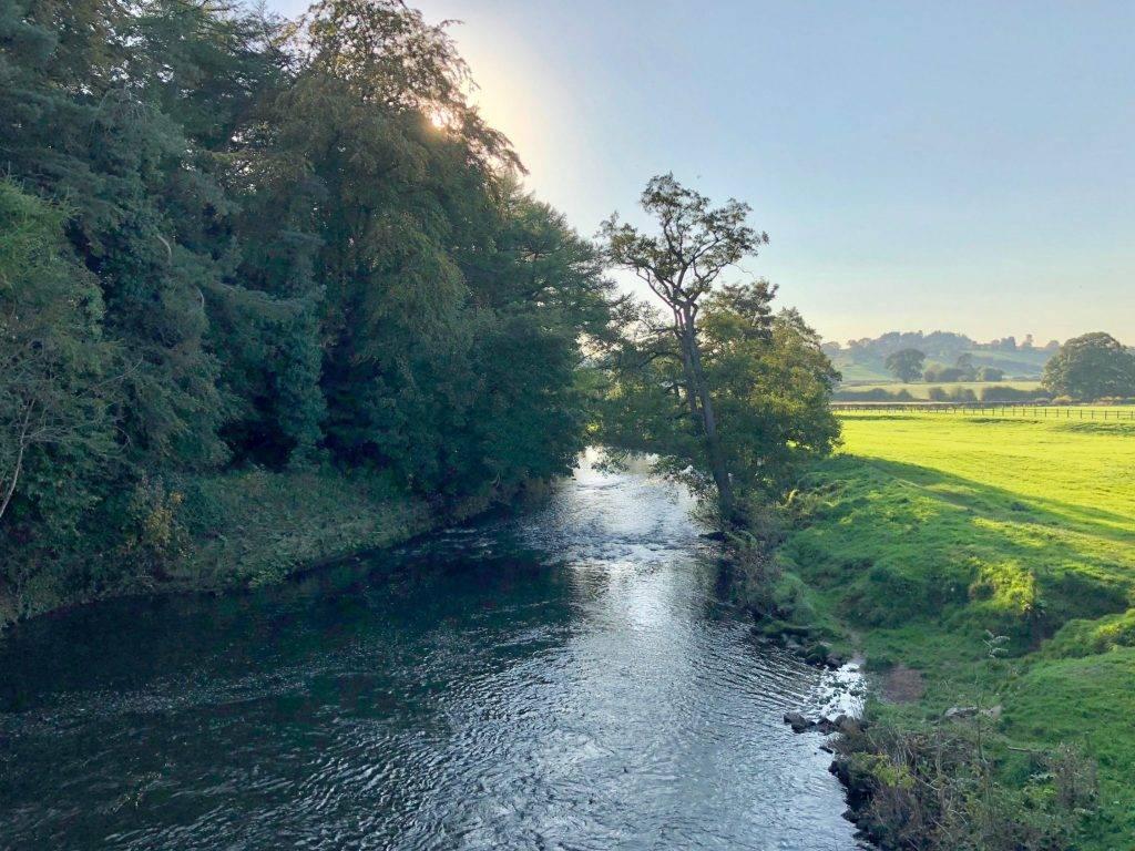 River_Dove