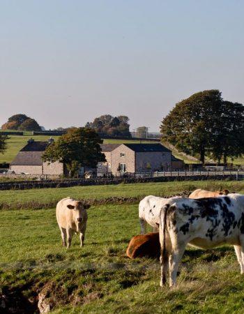 The Barn at Benty Grange