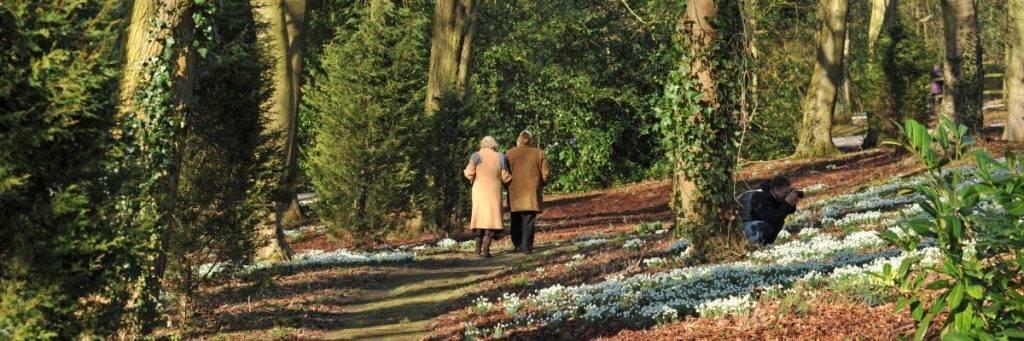 Hopton Hall Snowdrop Walk
