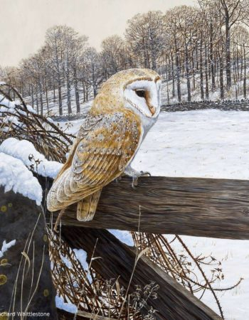 Richard Whittlestone Wildlife Gallery
